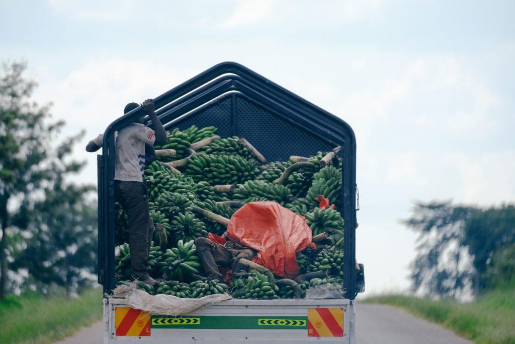 Transporting bananas on a lorry in Uganda