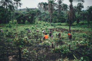 Women in sierra Leone planting trees